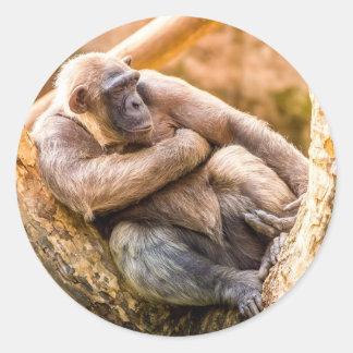 Chimpanzee In A Tree Classic Round Sticker
