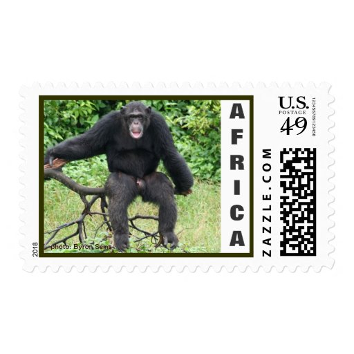 Chimpanzee in Africa Postage Stamp