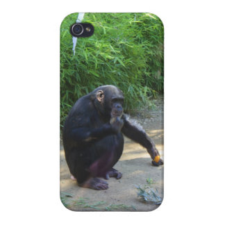 Chimpanzee in Deep Thought iPhone 4 Cover