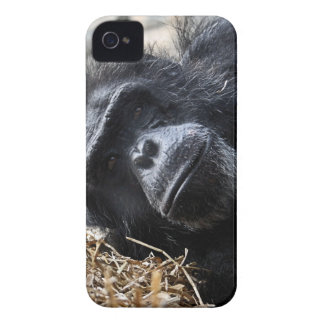Chimpanzee iPhone 4 Case-Mate Case