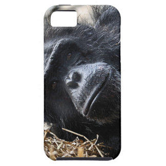 Chimpanzee iPhone SE/5/5s Case