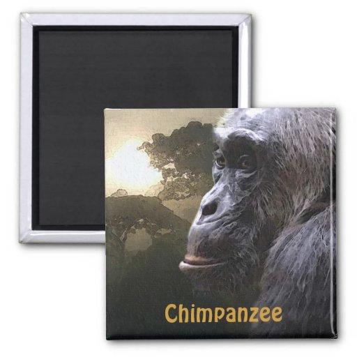CHIMPANZEE & JUNGLE Primate Wildlife Art Magnet