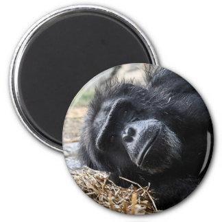 Chimpanzee Refrigerator Magnets
