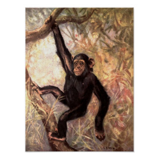 Chimpanzee Monkey by CE Swan, Vintage Wild Animals Poster