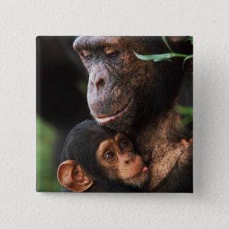 Chimpanzee Mother Nurturing Baby Button