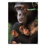 Chimpanzee Mother Nurturing Baby Card