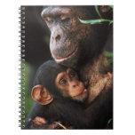 Chimpanzee Mother Nurturing Baby Notebook