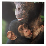 Chimpanzee Mother Nurturing Baby Tile