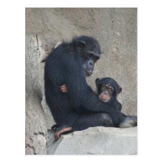 Chimpanzee Mummy and Baby Postcard