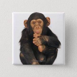 Chimpanzee (Pan troglodytes) Button