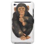 Chimpanzee (Pan troglodytes) Case-Mate iPod Touch Case