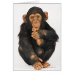 Chimpanzee (Pan troglodytes) Greeting Card