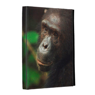 Chimpanzee (Pan troglodytes) Portrait in Forest iPad Cases