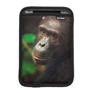 Chimpanzee (Pan troglodytes) Portrait in Forest iPad Mini Sleeves