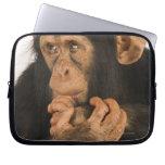 Chimpanzee (Pan troglodytes). Young playfull 2 Laptop Computer Sleeves