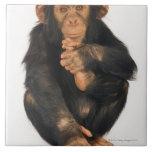 Chimpanzee (Pan troglodytes). Young playfull Large Square Tile