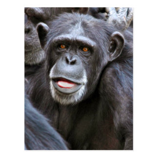 Chimpanzee Photo Postcard