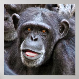 Chimpanzee Photo Poster