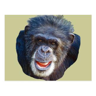 Chimpanzee Picture Postcard