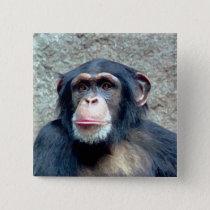 Chimpanzee Pinback Button