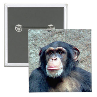 Chimpanzee Pinback Button