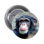 Chimpanzee Pinback Buttons