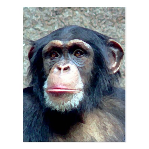Chimpanzee Post Cards