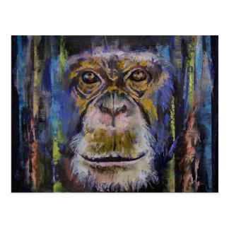 Chimpanzee Postcard