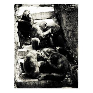 chimpanzee ruins postcard