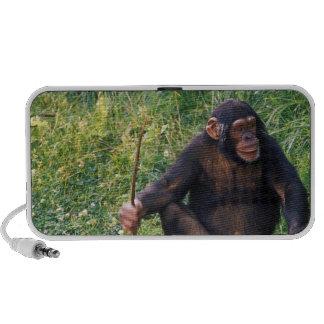 Chimpanzee using stick as a tool to obtain portable speaker
