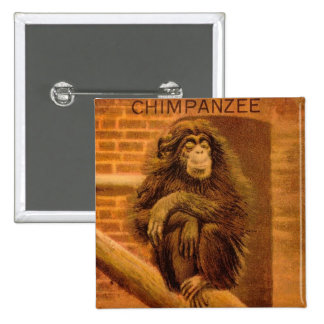 Chimpanzee Vintage Magic Lantern Slide 1890s Pinback Button