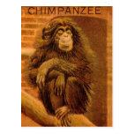 Chimpanzee Vintage Magic Lantern Slide 1890s Postcard