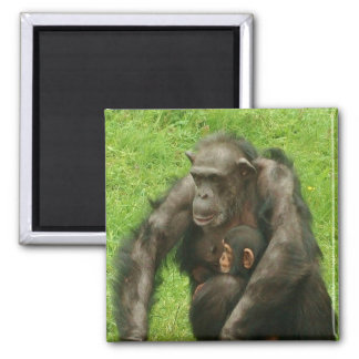 Chimpanzee with a Baby - Magnet