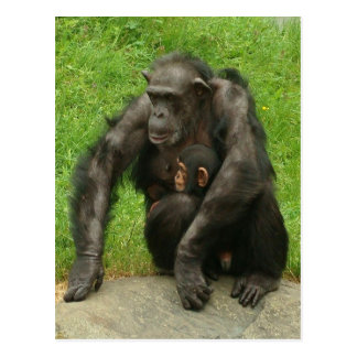 Chimpanzee with a baby - Postcard