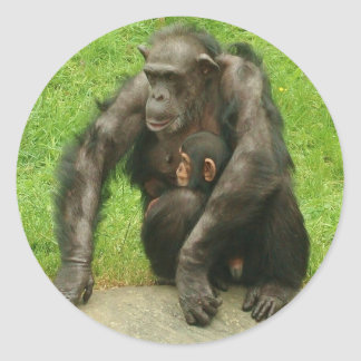 Chimpanzee with Baby - Sticker