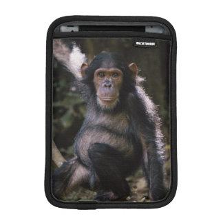 Chimpanzee Young Female Sleeve For iPad Mini
