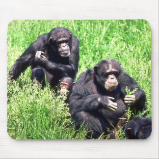 Chimpanzees eating grass (note infant) mouse pads