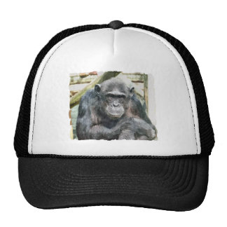 CHIMPANZEES TRUCKER HAT