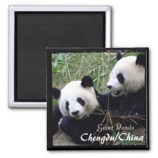 China, Chengdu, Giant Pandas (Magnet) 2 Inch Square Magnet