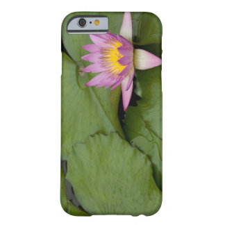 China, Hong Kong, New Territories. Chi Lin Barely There iPhone 6 Case