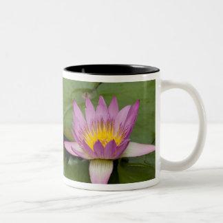 China, Hong Kong, New Territories. Chi Lin Two-Tone Coffee Mug