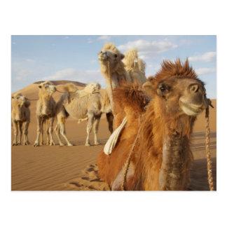 China, Inner Mongolia, Badain Jaran Desert 2 Postcard