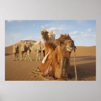 China, Inner Mongolia, Badain Jaran Desert 2 Poster