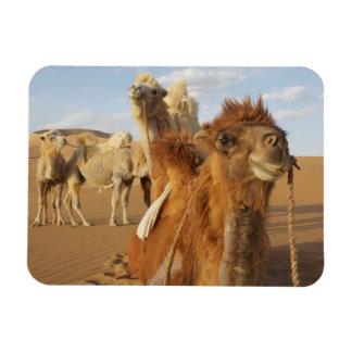 China, Inner Mongolia, Badain Jaran Desert 2 Rectangular Photo Magnet