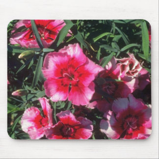 China Pink (Dianthus Chinensis) flowers Mouse Pad