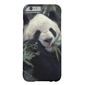 China, reserva de naturaleza de Wolong. Funda De iPhone 6 Barely There