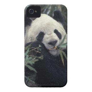 China, reserva de naturaleza de Wolong. iPhone 4 Case-Mate Cárcasa