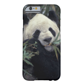 China, Wolong Nature Reserve. Giant Panda feeds Barely There iPhone 6 Case