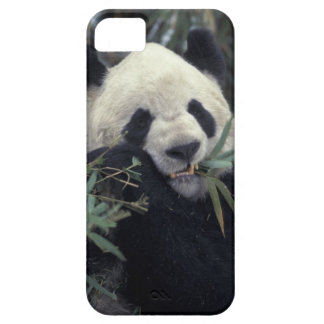 China, Wolong Nature Reserve. Giant Panda feeds iPhone SE/5/5s Case