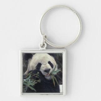 China, Wolong Nature Reserve. Giant Panda feeds Keychain
